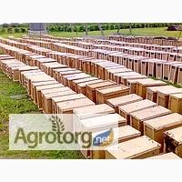 Пчелопакеты Карпатка 2016 года отправляем по Украине