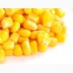 Кукурудза: закупівля у великих об ємах по всій території України