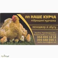 Підрощені курчата підрощена птиця бройлер