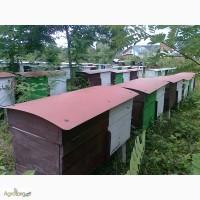 Пчелопакеты, бджолопакети можливо з доставкою