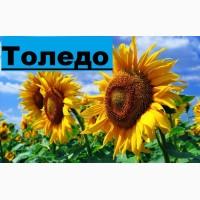 Насіння соняшнику Толедо (106 - 109 дн.) толерантний до гранстару