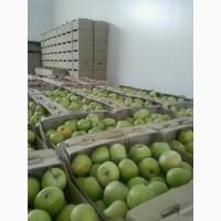 Продам яблоки семеренко оптом