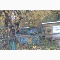 Продам бджоли Рівне