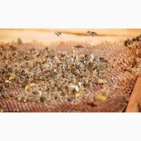 Продаю бджолосім#039;ї. Недорого