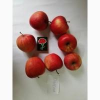 Срочно продам яблоки разных сортов и сок натуральнный от производителя