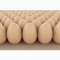 Инкубационное Яйцо Мясо-Яичный Кроссов И Пород Венгрия, Украина