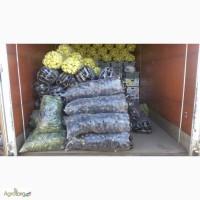 Продам кабачок, товарный и на переработку