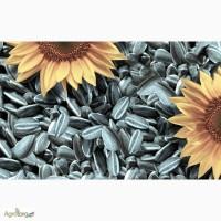 Семена подсолнечника Limagrain 5665 (Лимагрейн 5665)
