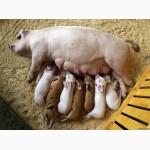 Ферментационная подстилка Нетто-Пласт для животных (куры, свиньи, КРС) 3 года без навоза