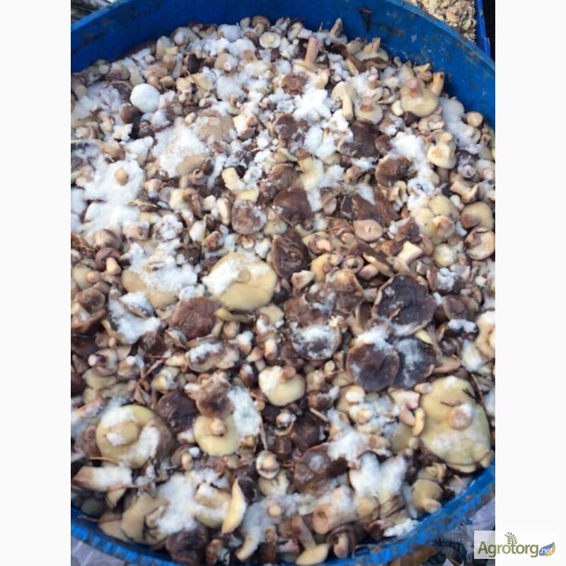 Фото 2. Продам лесной гриб. Маслята. 1- сорт