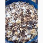 Продам лесной гриб. Маслята. 1- сорт