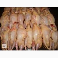 Продам домашнее мясо бройлерного перепела