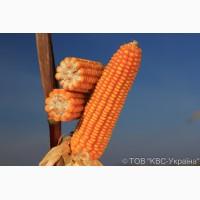 Гібрид кукурудзи Еміліо (KWS)