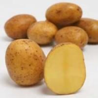 Картофель сорт Аннушка сверхранний 1 репродукция, 3 кг, сетка