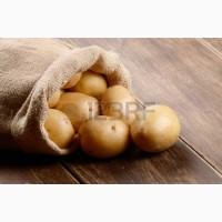 Продам картофель оптом из песка, доставляем по всей Украине