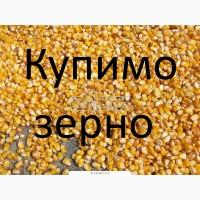 Компанія купує кукурудзу (побічний продукт кукурудзи), з елеватора і у виробників