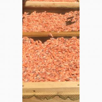 Продам Азовскую креветку 1 пакет - 6 кг