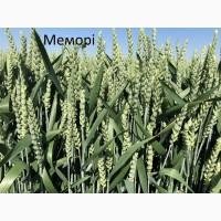 Семена озимой пшеници Мемори 1-реп. (Франция)