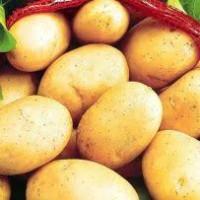 Картофель продовольственный и семенной оптом