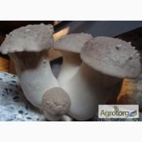 Белый степной гриб - мицелий