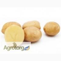 Продам насінну картоплю (Роздріб, малий опт)