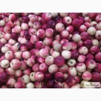 Продам срочно яблоки разно сортовые подбор с сада на переработку около 80 тонн