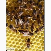 Бджолопакети та рої