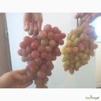 Продам столовый виноград отличных сортов