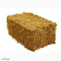 Продаю солому пшеничну