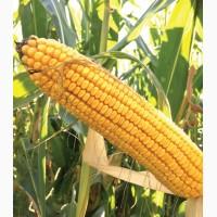 Гібрид кукурудзи ДС 1071 С (Dow Seeds)