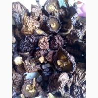 Продаются грибы маслята