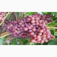 Крупным оптом отличный виноград