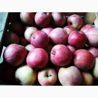 Продам яблоки с сада 1, 2 сорт