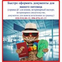 Срочно сопроводительные документы для кошки (справка ф1 и т.д.), Харьков