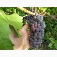 Продам виноград со своего виноградника