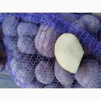 Продам картофель/картошку/картопля