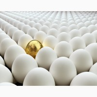 Реализация инкубационное яйца