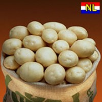 Картопля Нектар фасовка 5кг, 25кг Голландія