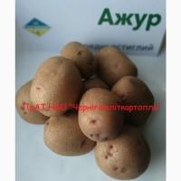 Продаж насіннєвої картоплі сертифікованої еліти найкращі сорти картоплі