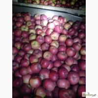 Продам яблоко с холодильника, Донецкая область