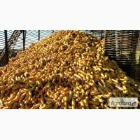 Купим постоянно Кукурузу фуражную всей территории Украины