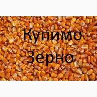 Закуповуємо відходи кукурудзи (вологу кукурудзу, чи не кондицію) по Дніпропетровщині