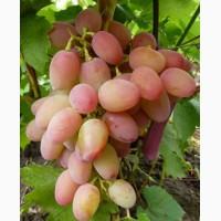 Виноград продажа оптом