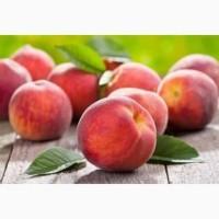 Продам саджанці персика Редхейвен