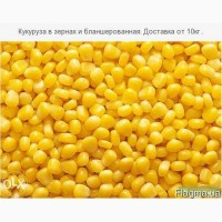 Кукуруза зерно суперсладкая Оверленд