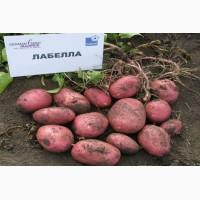 Продаем семенной картофель Лабелла I и II репродукции. Отправка по всей Украине