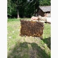 Продам пчелопакеты 2021 года