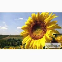 Продаем семена гибридов подсолнечника