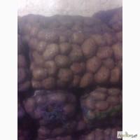 Продам картошку разных сортов
