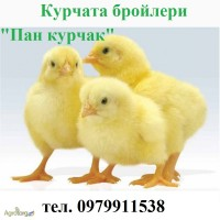 Продам курчата-бройлери Пан курчак